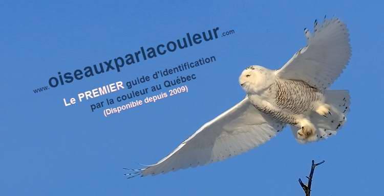 Oiseaux du qu bec for Oiseau par la couleur
